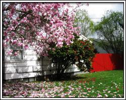 yard - 2010 March 25 - 11
