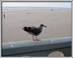 2010 October beach trip 4