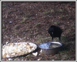 Crows - December 6, 2010