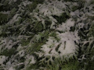 March 21, 2012 - SNOW - 6