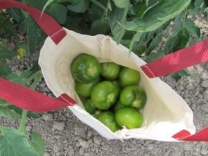 Kruger's Farm - 6 - Picking bag