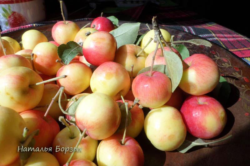 яблочки полукультурки