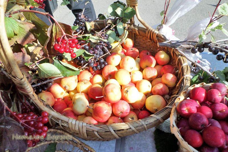 яблоки сорта Пальметта