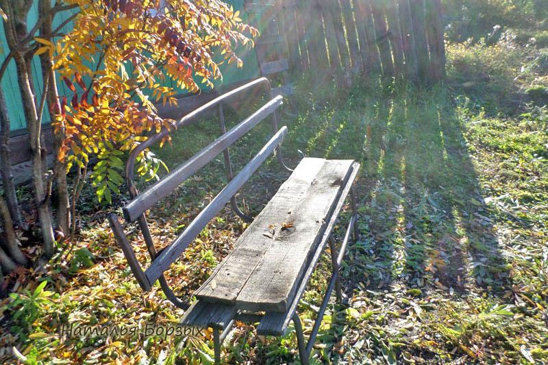 скамейка под рябиной