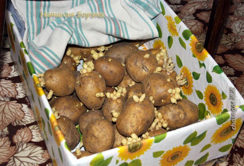 прошлогодняя картошка с базара