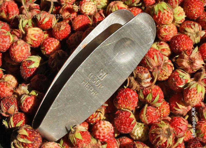 полевая клубника и щипчики для чистки ягод