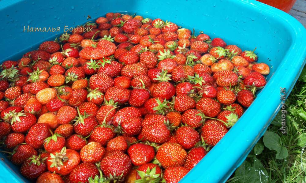 землянику обязательно надо мыть в большом тазу, чтобы земля осела с ягод на дно