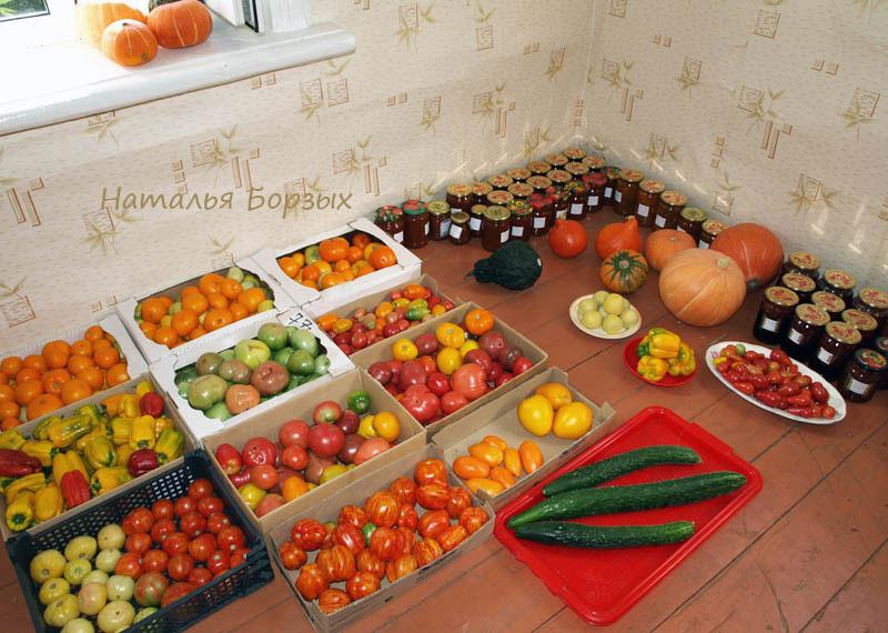 помидоры на продажу