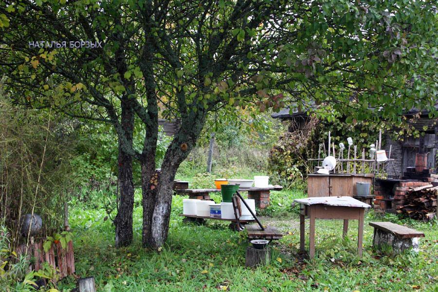 кухня-столовая под моей яблоней