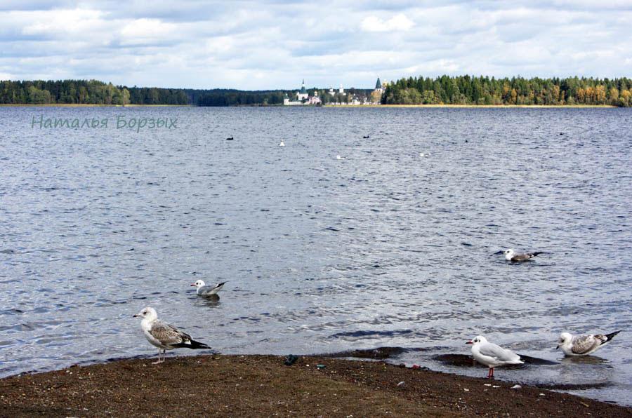 чайки и остров