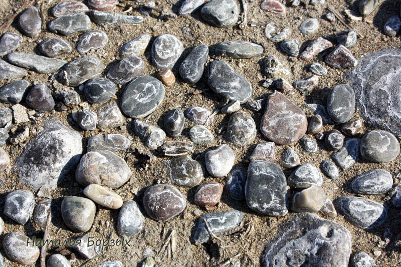 береговая галька белёсая от солей