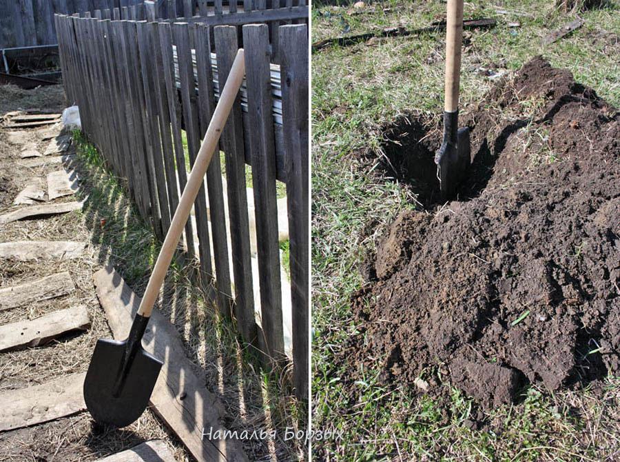 новая лопата, черенок к ней, и вот уже можно копнуть местную почву в поисках глины