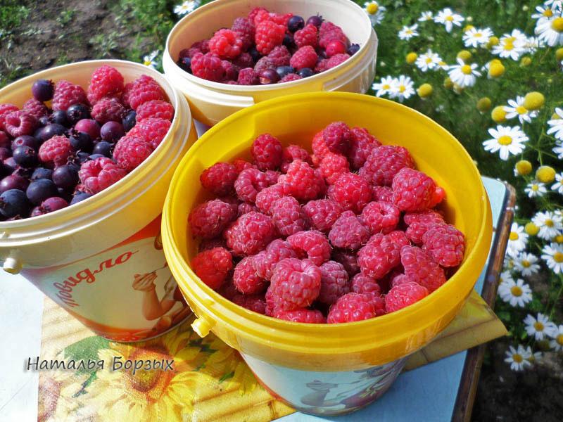 полтора кило ягод
