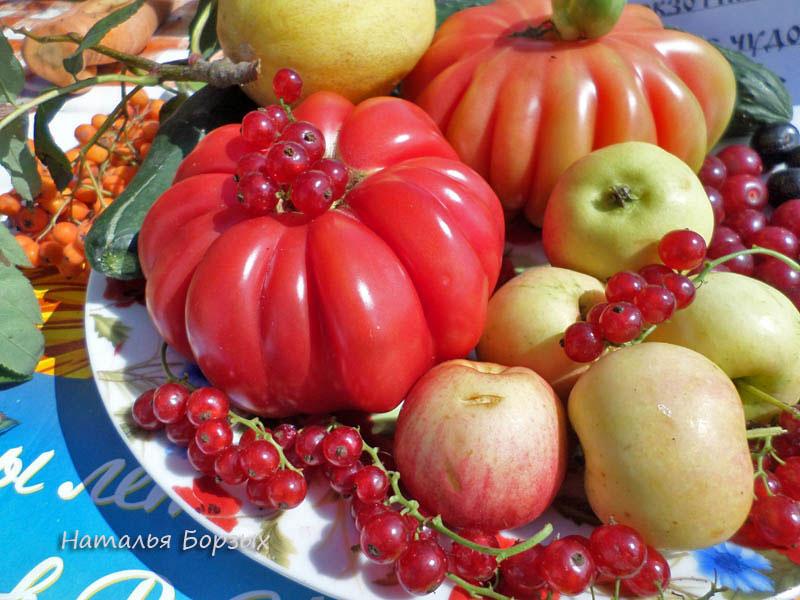 ребристые томаты