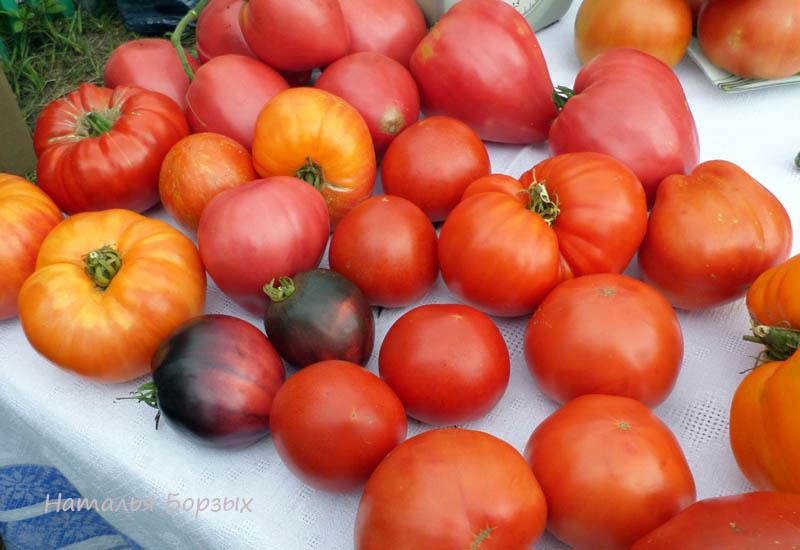 томаты Зои Олейник