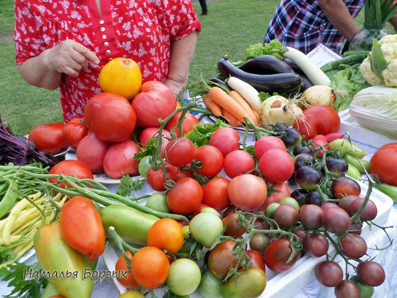 свирские томаты