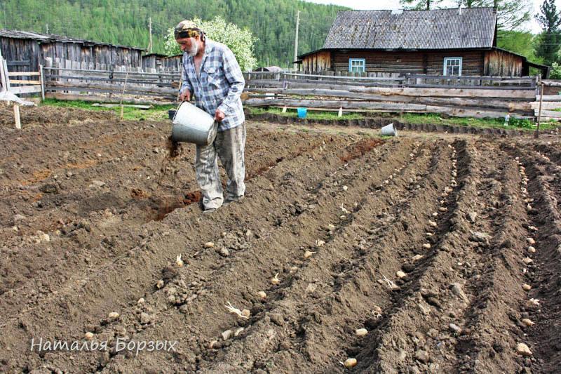 посадка картошки на большом поле