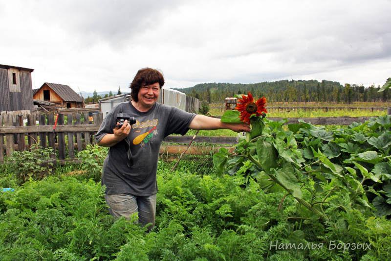 Анна показывает свой огород - морковь выше колена, подсолнух упал