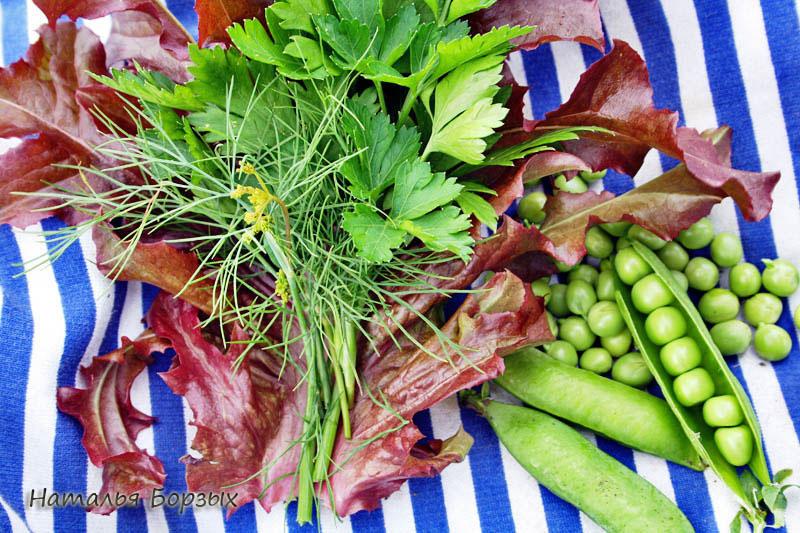 кинза, укроп, салат и горох