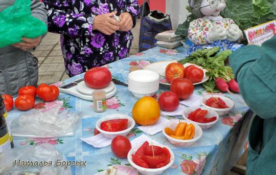 дегустация помидоров