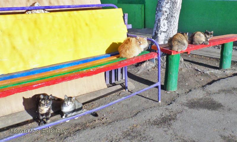 свирские котики