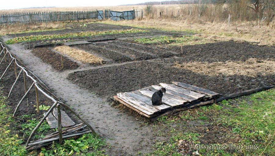 огород перед Введением