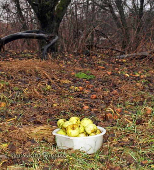 яблоки из-под листвы