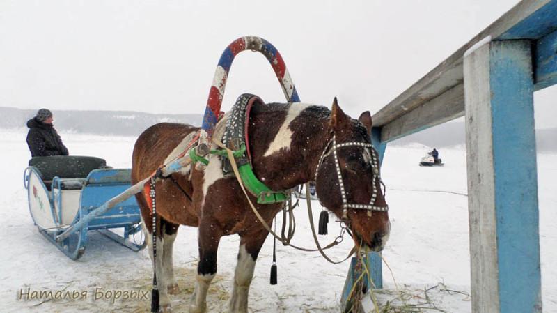 сибирская лошадка