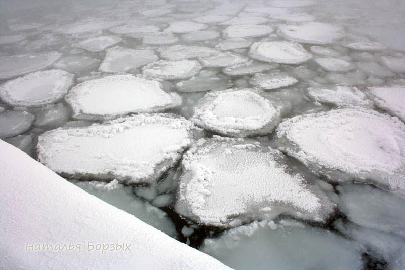 в прибрежной части, где тихая вода, плавают такие льдины