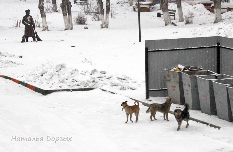 бродячие собаки утром промышляют на мусорке