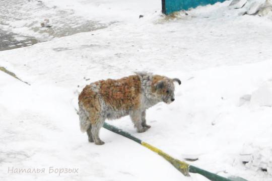 больной пёс