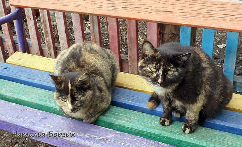 бесхозные городские кошки