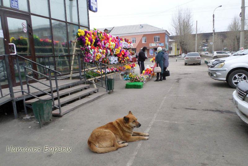 торговый центр с ничьей собакой