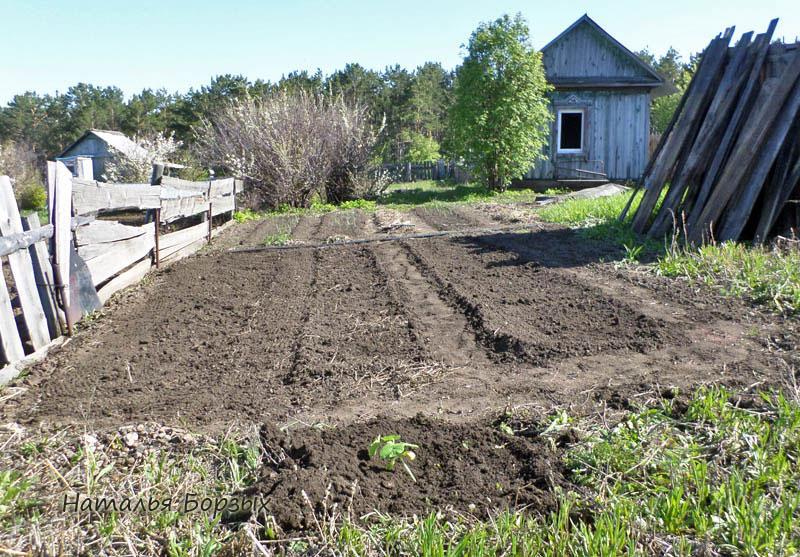 часть огорода на бугре