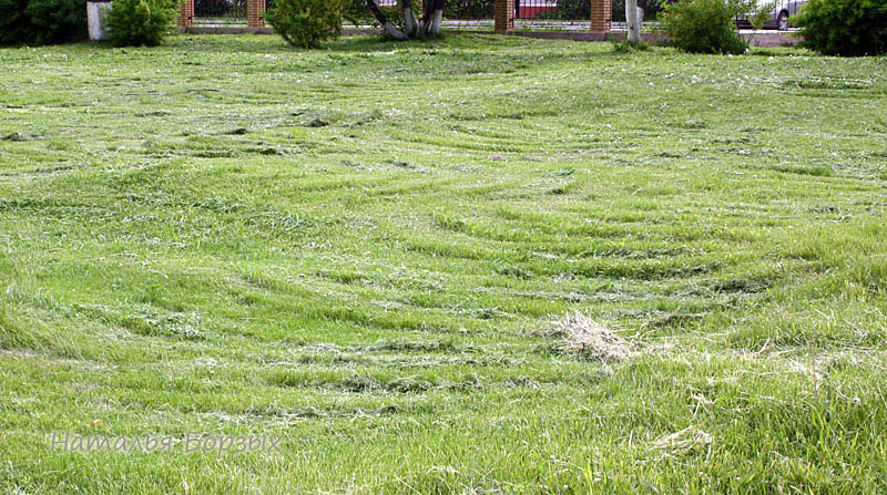 стригаль газона был небрежен и сердит