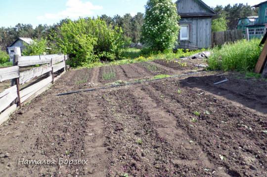 огород на бугре