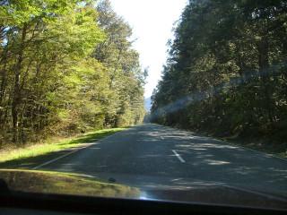 091031 Beech forest, Lewis Pass