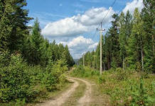 ЛЭП в лесу