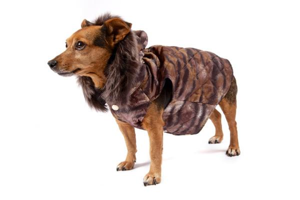 Casey-in-Mulberry_dogs_v_9nov12_pr_b_1080x720