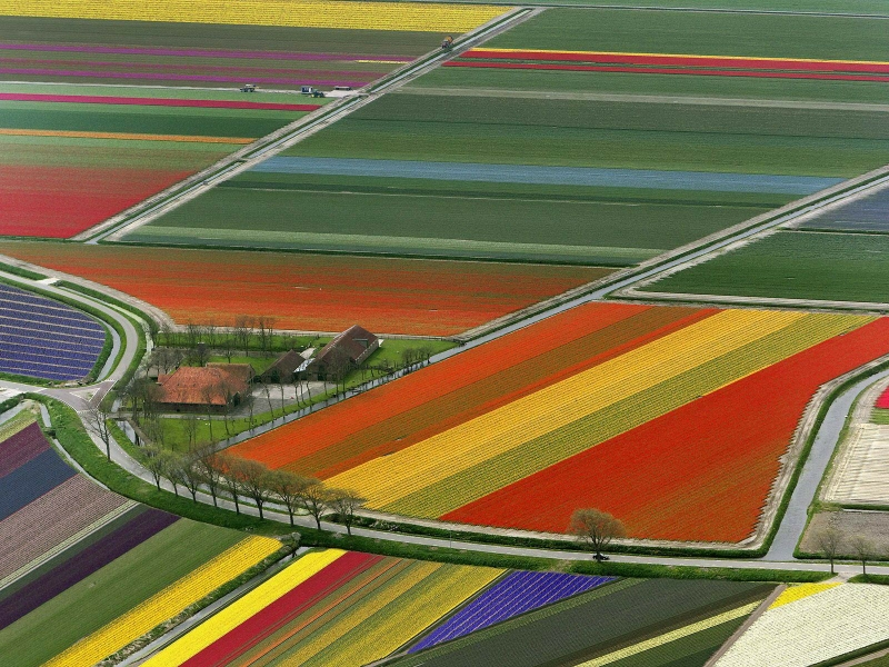 landscapes colorful fields holland the netherlands 1600x1200 wallpaper_www.wallpaperhi.com_17