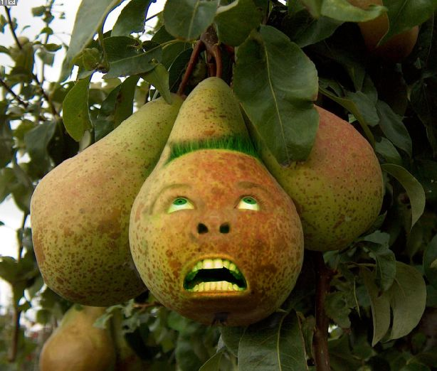 Fruit25