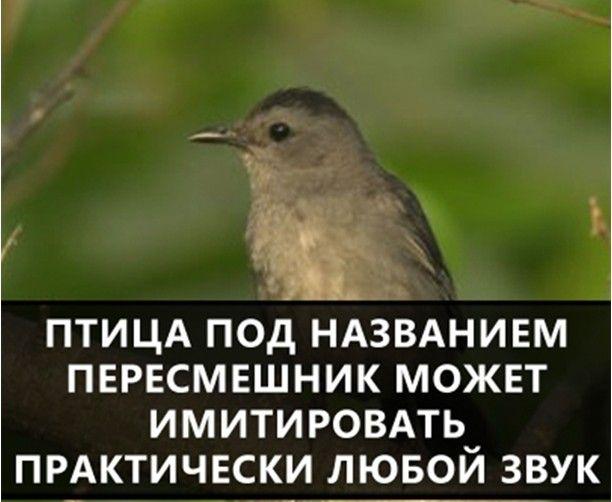 8809601kiv
