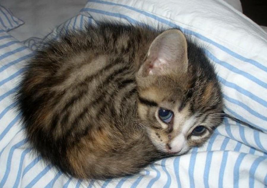 Что делать если котенок обиделся