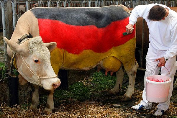 210606_german_cow