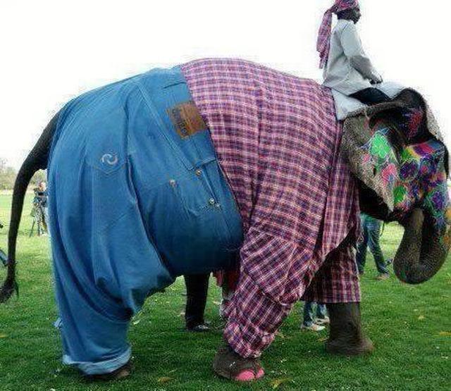 elephant-jeans-shirt-clothed-best-dressed-13535820897