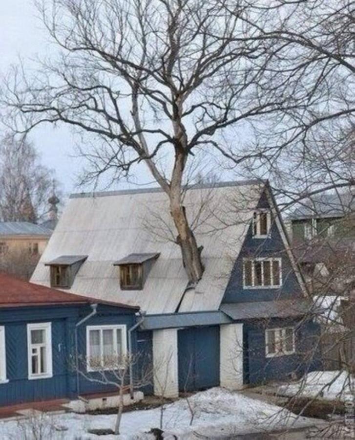 всё-плохо-разное-дом-дерево-1539278