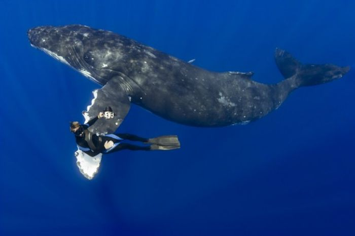 whale_02