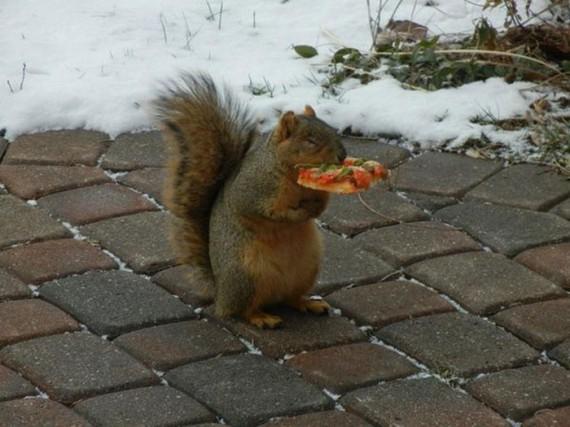 1380235858_1380043838_belka-pizza-01