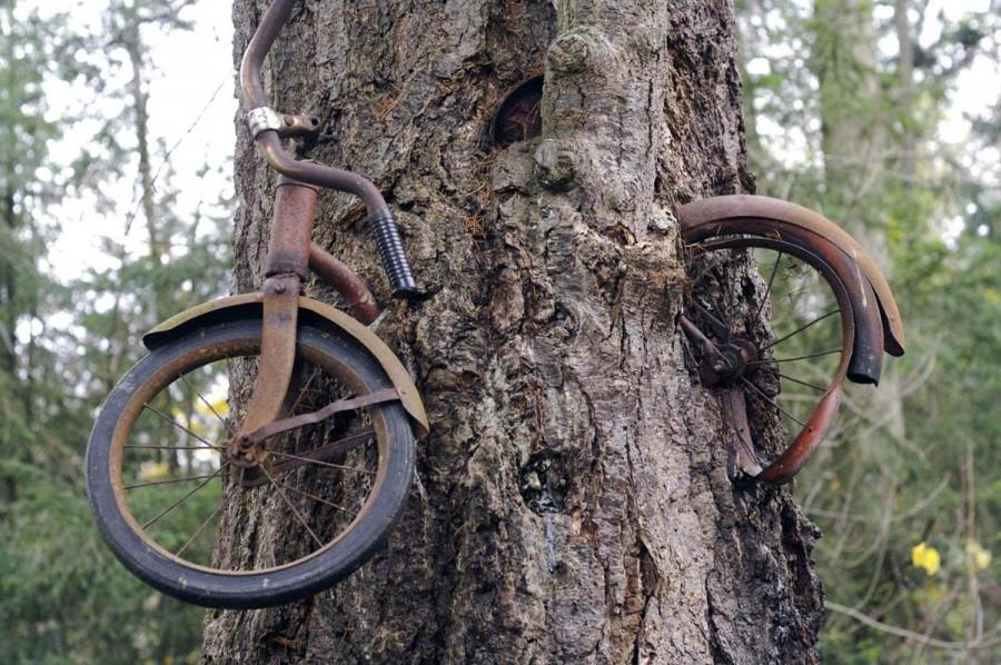 bike-eating-tree