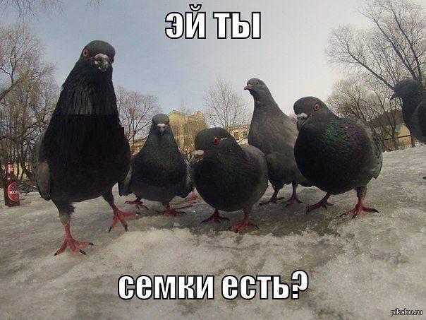1387978237_546919229